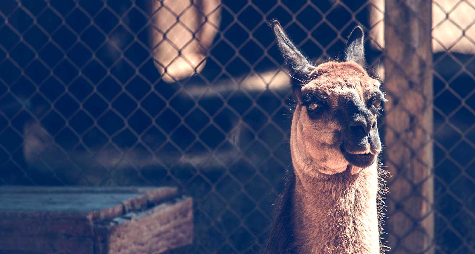 Llama security